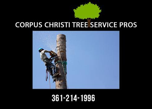 Corpus Christi Tree Service Pros